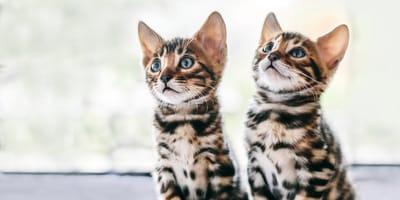 Quale razza di gatto scegliere? A ogni esigenza il suo Micio