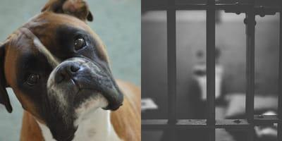 Hasta 5 años de cárcel por hacerle cirugías estéticas a un animal: la propuesta en el Senado