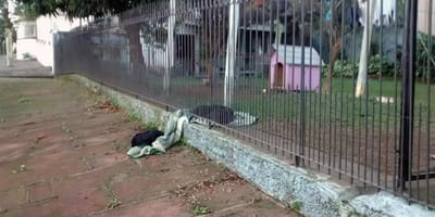 Pies na kocu na chodniku.