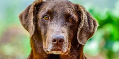 Dog age calculator: How old is my dog in human years?
