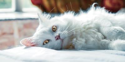 Gatti e stelle: l'oroscopo felino di marzo