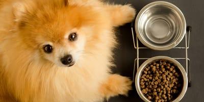 Se il cane non mangia forse dovreste porvi queste 7 domande