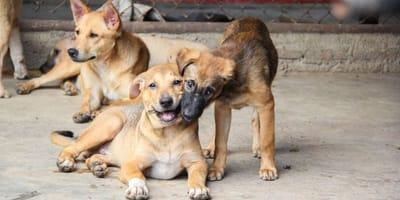 Napoli, l'originale progetto per i cani randagi