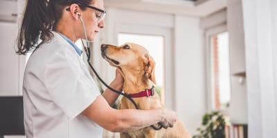 mujer veterinaria atendiendo a un perro