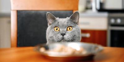 I gatti sono più fedeli al cibo che al loro padrone? Lo studio