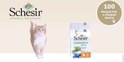 ¡Prueba GRATIS la comida Schesir Natural Selection para gatos adultos esterilizados!