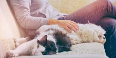 L'opinione sugli animali domestici che sta facendo discutere