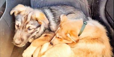 Adottano un cucciolo, ma tornano indietro: la sorpresa per il rifugio