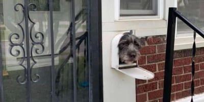 Ten pies codziennie wywołuje uśmiech na twarzach przechodniów, witając ich w nietypowy sposób