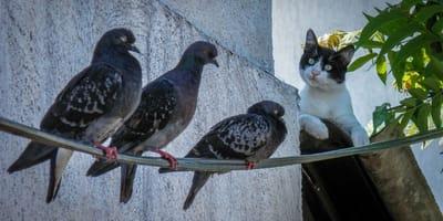 Quali sono i pericoli per un gatto che mangia un uccellino?