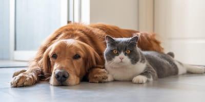 Preisexplosion: So teuer sind Hunde und Katzen durch die Corona-Pandemie