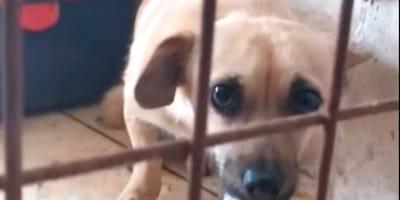 ¿Quieres saber qué siente un perro cuando es abandonado por su familia? Mira este vídeo