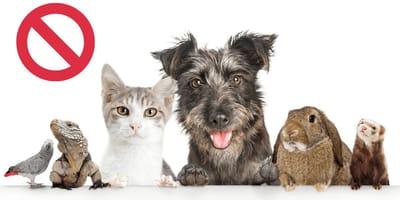Hund und Katzen bei der Partnersuche - gut oder schlecht?