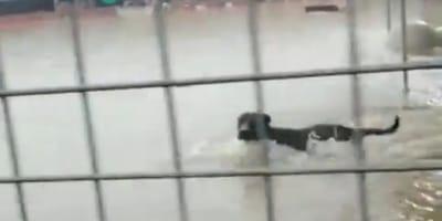 perro cubierto de agua en una inundacion