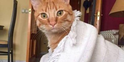"""Ten kot kocha wszystkich ludzi, ale nikt go nie chce z powodu rzekomej """"wady"""""""