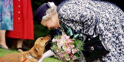 regina-elisabetta-e-cane