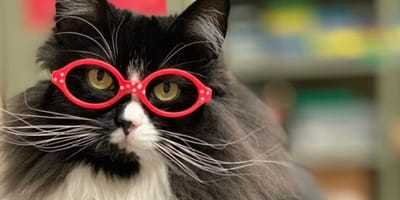 Adorable rescue cat wears glasses for the most incredible reason
