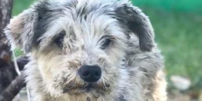 perros en adopcion metro cdmx
