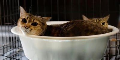 Da imprenditore a protettore dei gatti: la storia di Sakae Kato