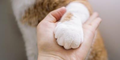 Come insegnare al gatto a dare la zampa?