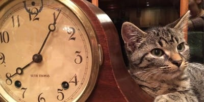 How do cats understand time, and what does it mean to them?