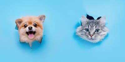 Welpe und Kätzchen blaue Wand