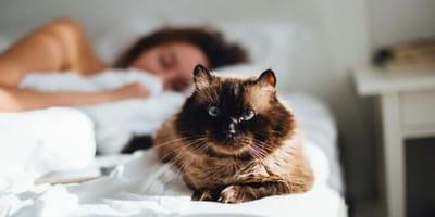 Kot w nogach łóżka