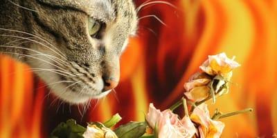Perché il gatto puzza? Un viaggio nei cattivi odori di Micio