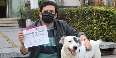 Un desalmado le cortó la oreja con tijeras de jardín: hoy este perrito de Puebla le da una segunda oportunidad a los humanos