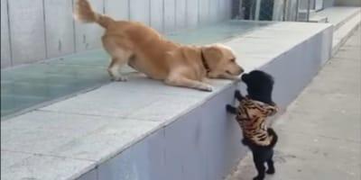 Das Treffen der beiden Hunde.