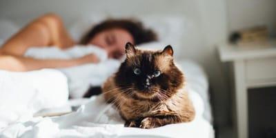Endlich kennen wir den wahren Grund, warum Katzen immer am Fußende des Bettes schlafen!