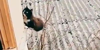 Ten kot-kaskader jest lepszy niż Tom Cruise! (VIDEO)