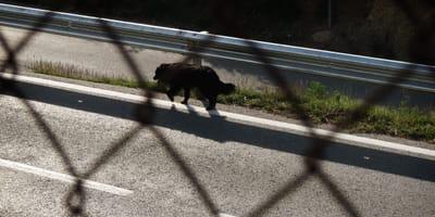 perro de color negro por una carretera