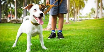 Come gestire al meglio le prime passeggiate col cane?