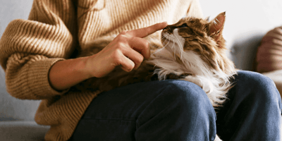 How do cats recognise their owners, even after years apart?
