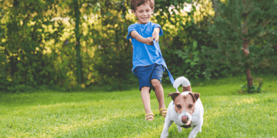 How to stop your dog from pulling on the lead