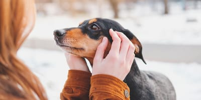 Psychologe im Interview: Deshalb sind Hunde in der Pandemie so wichtig für uns!