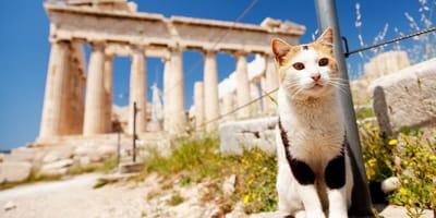 Los mejores nombres griegos para gatos: hermosos y con significado