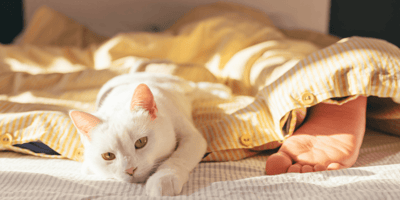 gato duerme a los pies de la cama