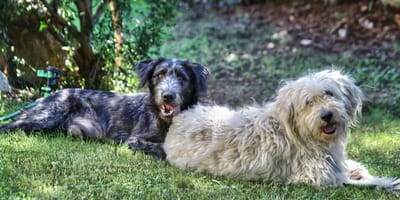 Caratteristiche e allevamento del Cane Fonnese