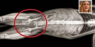 montaje de la radiografia de un gato y arriba la cara de martita de grana