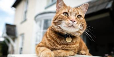 Collare per gatti: è una buona idea?