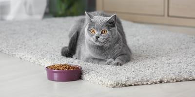 Quali sono le migliori crocchette per gatti sterilizzati del 2021?