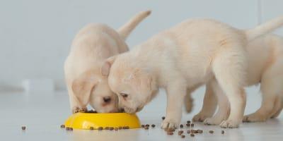 Quali sono le migliori crocchette per cani cuccioli del 2021?