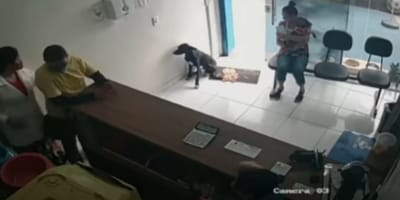 perrito entra a veterinaria a pedir ayuda
