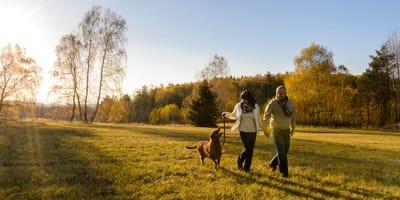 wyprowadzać psa na spacer