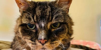 20 years after losing her cat, woman gets extraordinary call from RSPCA