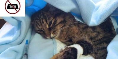 Un taxista de Inca (Mallorca) se niega a llevar a un gato moribundo en su taxi: su dueño entra en cólera
