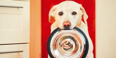 4 reglas de oro para una dieta perfectamente adaptada a la naturaleza de los perros