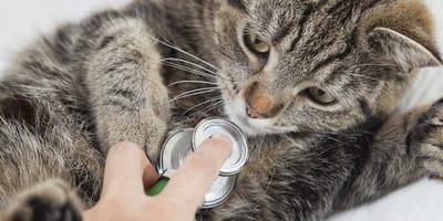 ¿Cómo tratar a un gato envenenado?